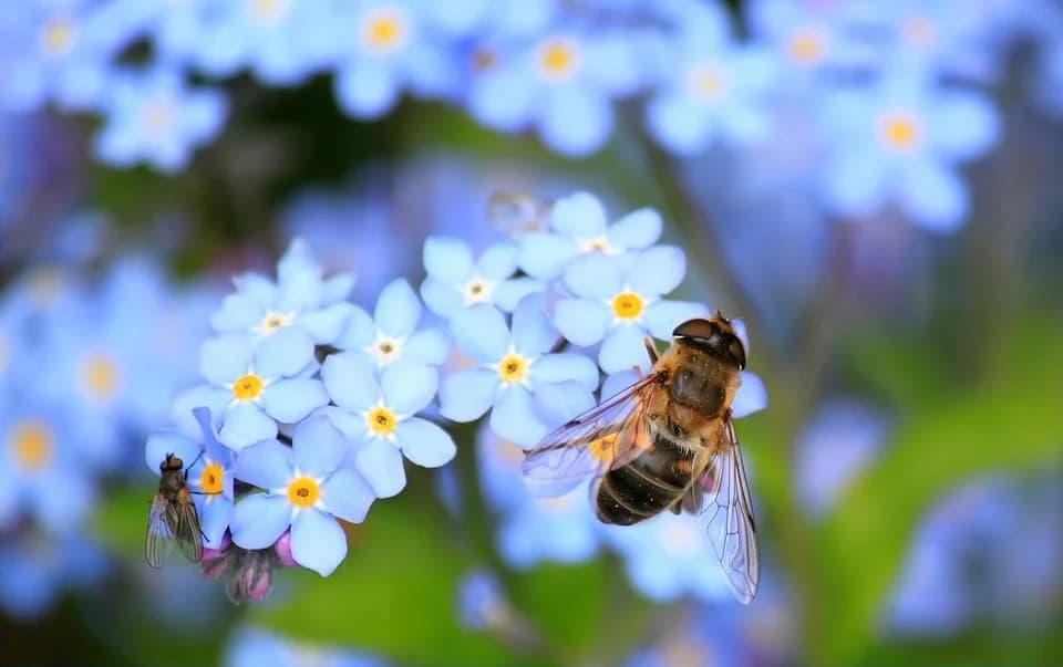 arı sokma ve tedavisi