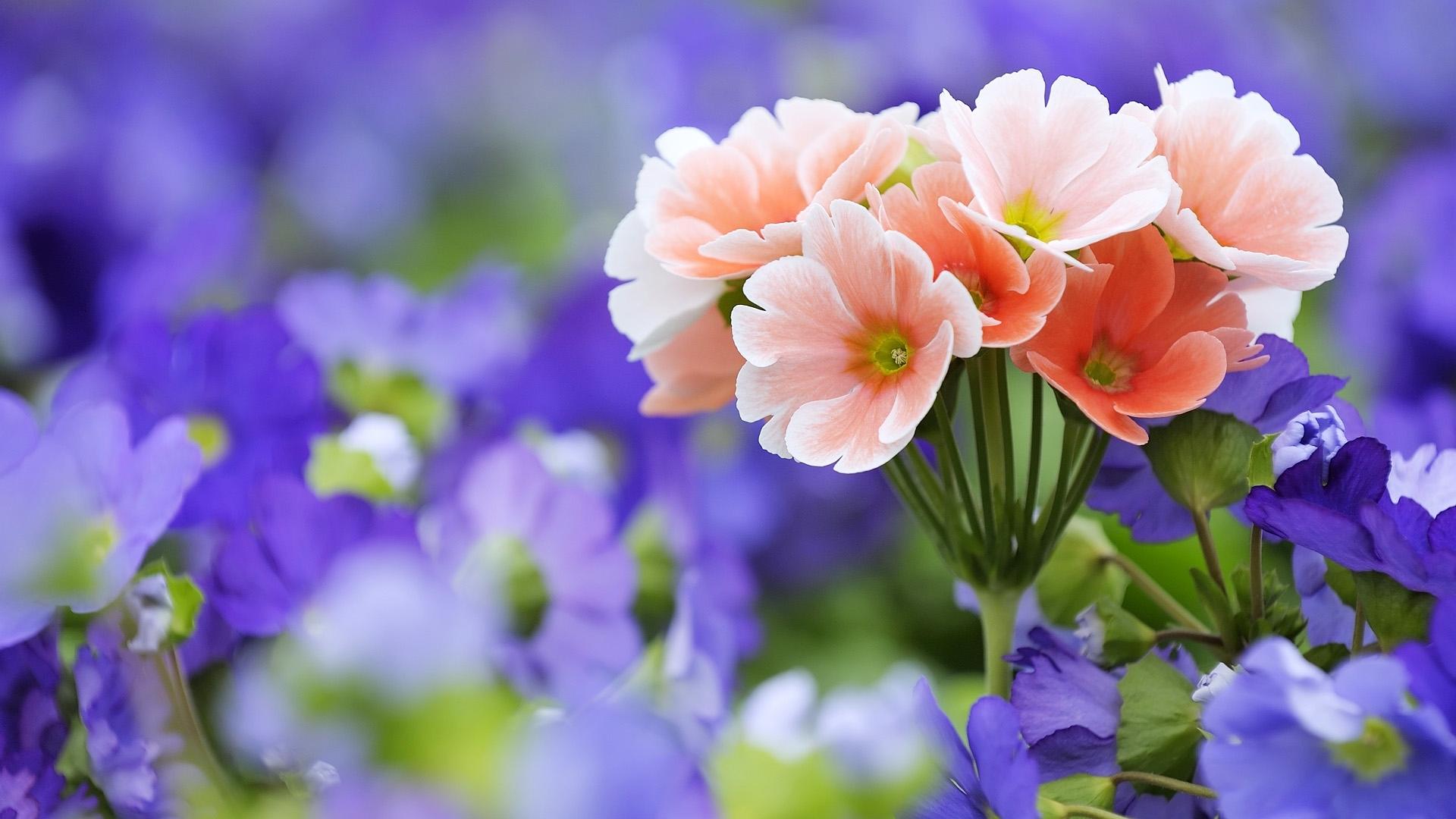 Çiçek Büyütme