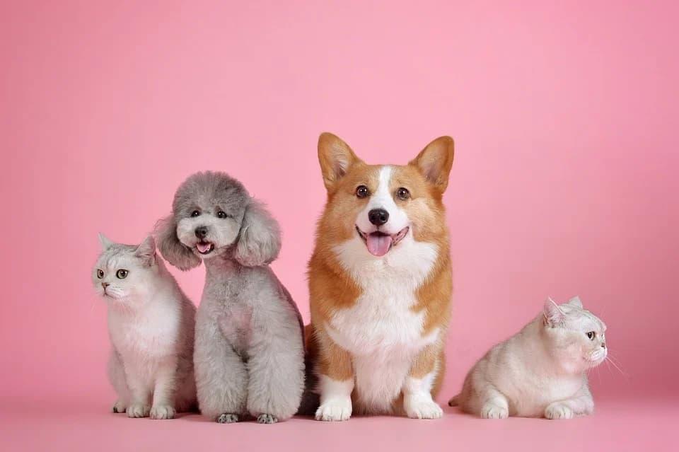 Evcil Hayvanlara Nasıl Bakılır?